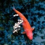∝〃∝〃魚●師兄🐬