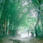 紫.竹.林
